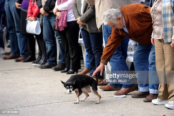 Former president senator Jose Mujica touches his pet dog Manuela as he participates in the May Day celebrations in Montevideo on May 1 2015 AFP...