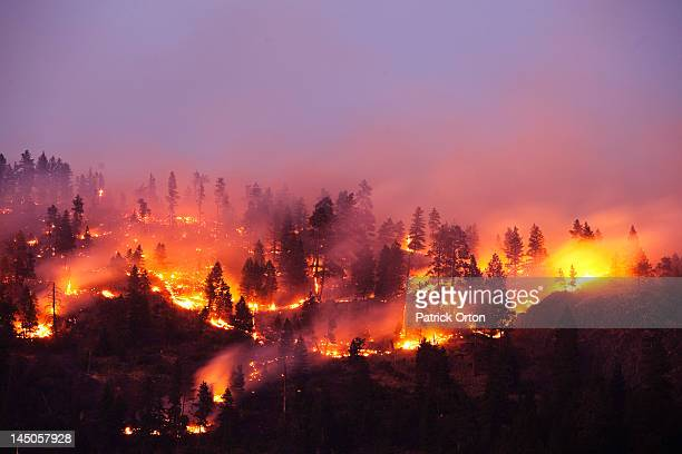a forrest fire burning the side of a mountain in montana. - forest fire stock pictures, royalty-free photos & images