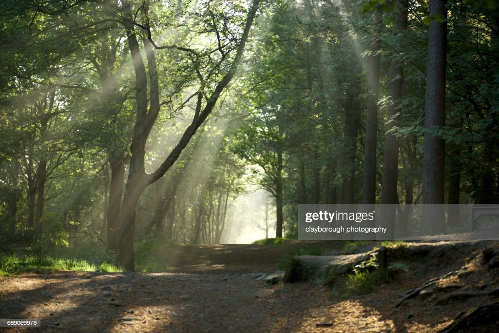 Forrest of Light : Stock Photo
