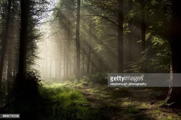 Forrest of Light