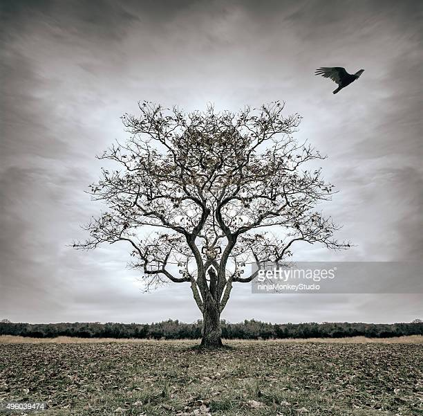 forsaken tree of desolatation - death stock pictures, royalty-free photos & images