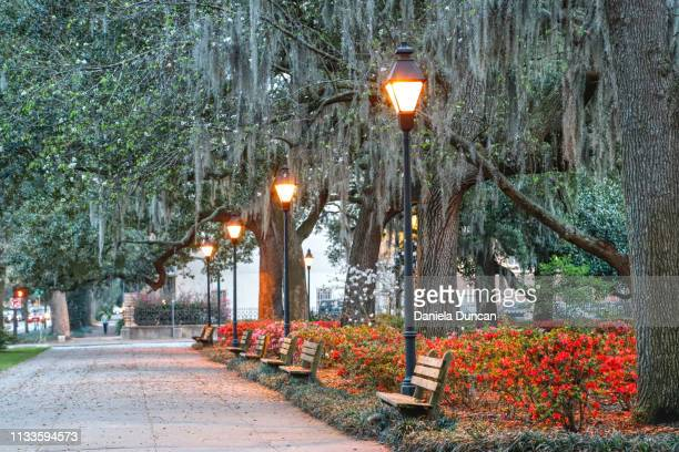 forsyth park in savannah - savannah stock pictures, royalty-free photos & images