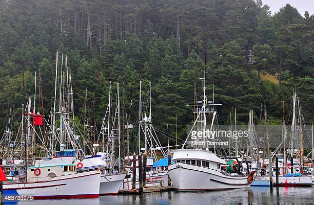 fort bragg boat harbor - fort bragg stock pictures, royalty-free photos & images