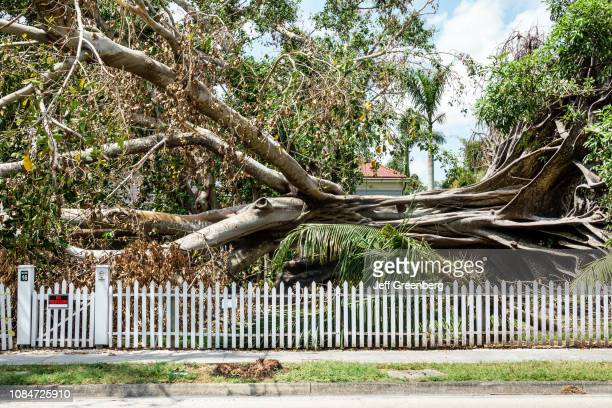 Fort Myers Edison Ford Winter Estates with downed tree after hurricane