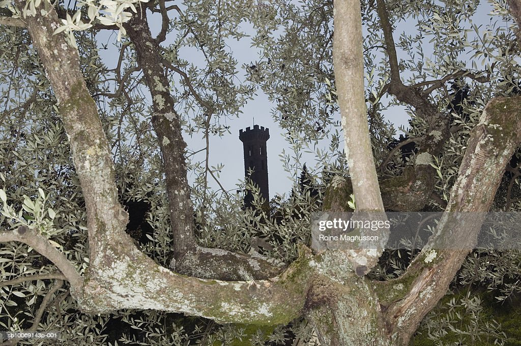 Fort tower and olive tree : Stockfoto