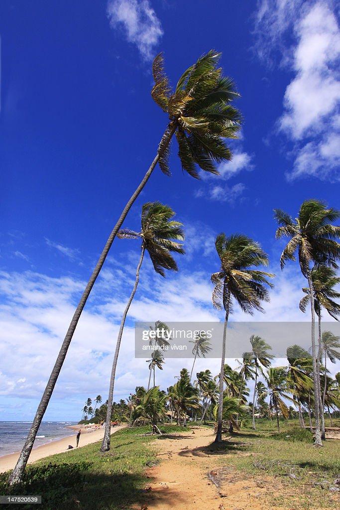 Forte beach : Bildbanksbilder