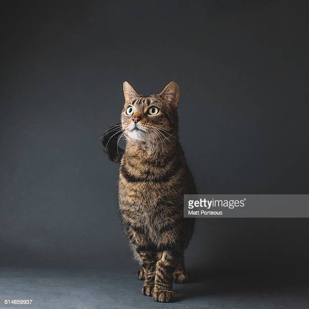 fortunate tails - tabby stock pictures, royalty-free photos & images