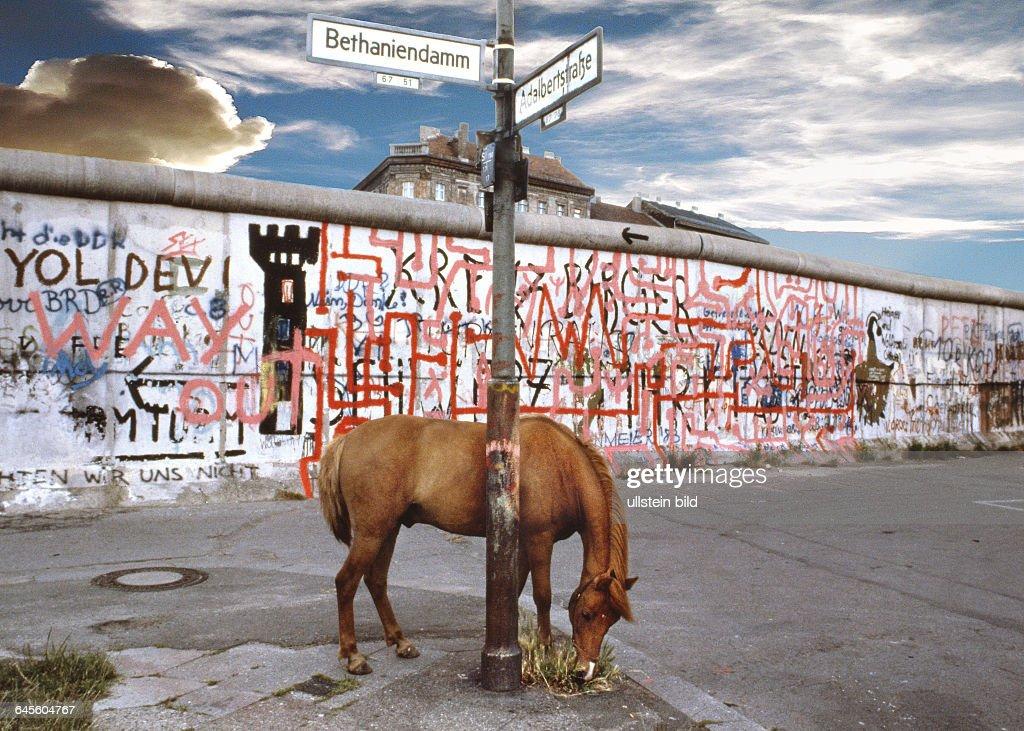 Fortune Ist Ein 18 Jahre Altes Pony Vom Kinderbauernhof An Der