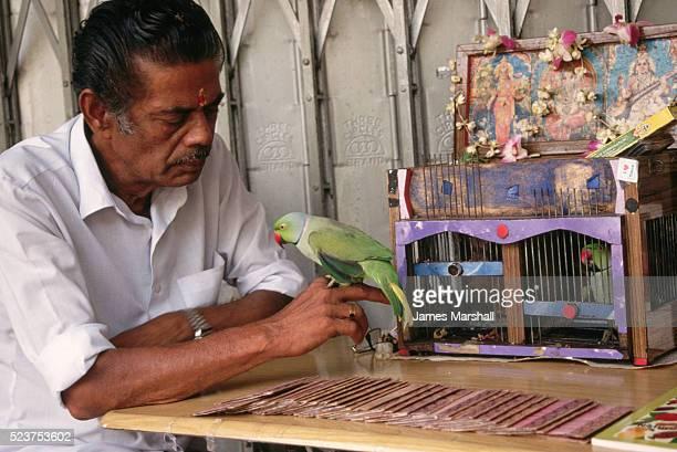 Fortunetelling Parrot