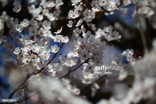 forward to spring - spring forward stock pictures, royalty-free photos & images