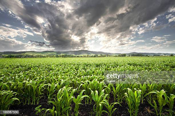 forward view of field captures storm filling the sky above - queensland stock pictures, royalty-free photos & images