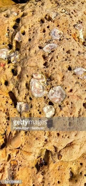 fosil rock yellow - isla de antigua fotografías e imágenes de stock
