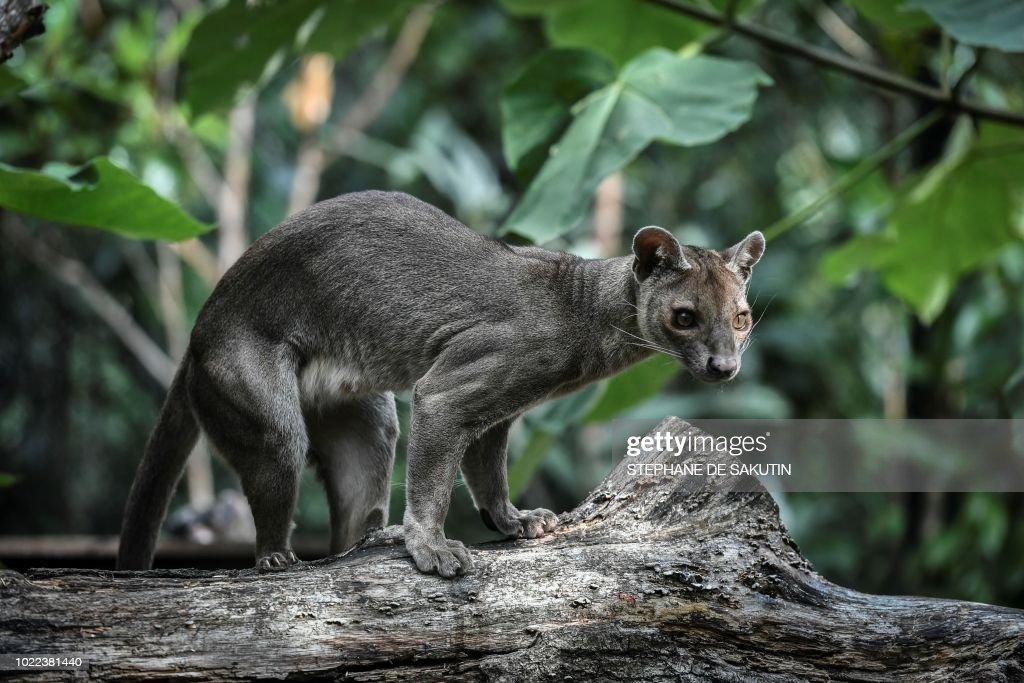 FRANCE-ANIMALS-BIRTH-ZOO : News Photo