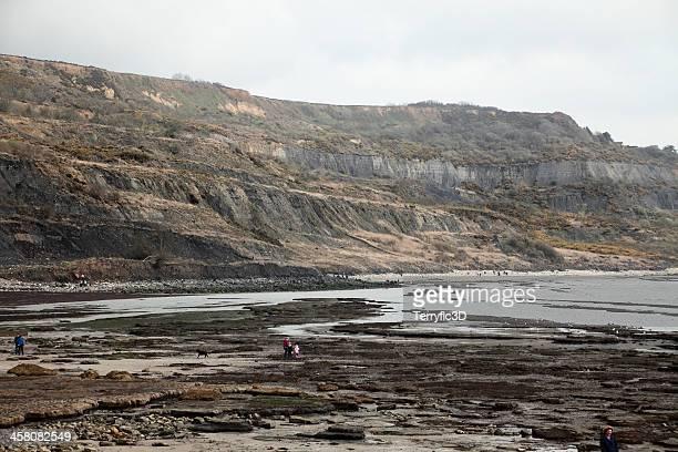 fossil collecting at lyme regis, uk - terryfic3d stockfoto's en -beelden