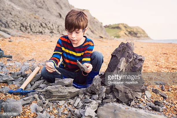 fossil hunting - fossil stock photos and pictures