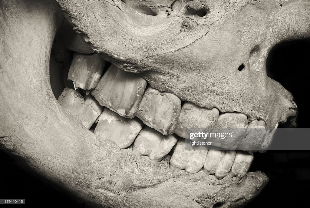 Fossil jaw : Stock Photo