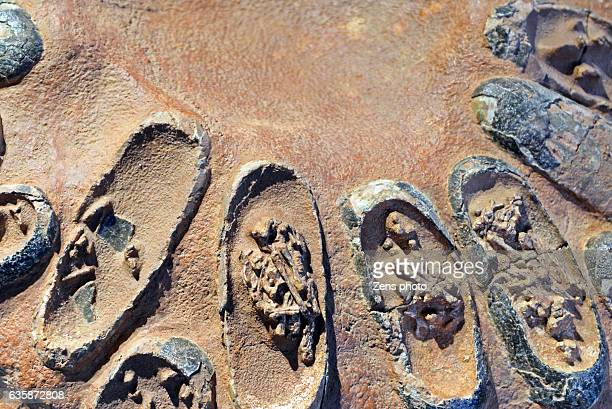 fossil of dinosaur egg embryo - fossil stock photos and pictures