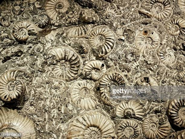 fossil - palaeontology stock pictures, royalty-free photos & images