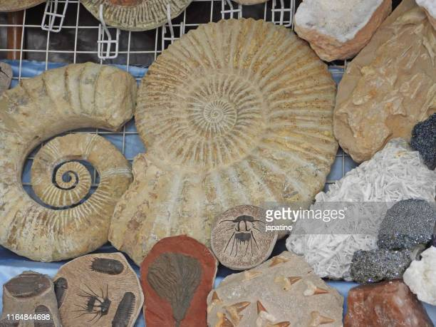 fossil shop a street market - prehistoric era stock pictures, royalty-free photos & images