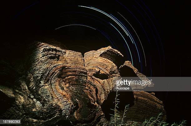 Fossil stromatolite 272 billion years old bacterial deposit two metres tall and star trail Near Nullagine River Pilbara region Western Australia