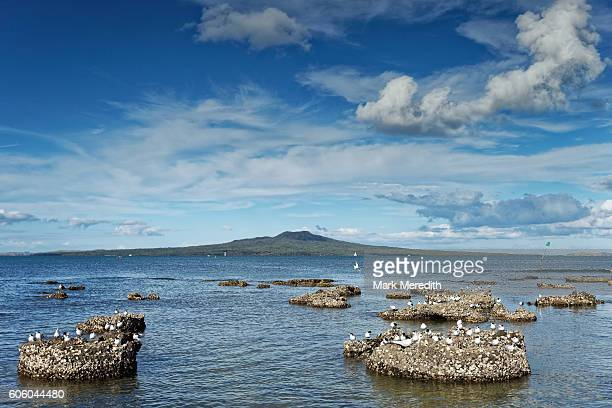 Fossilised forest and Rangitoto Island from Takapuna