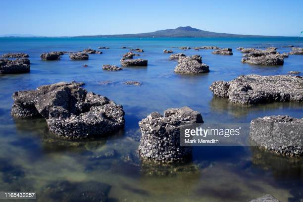 fossilised forest at takapuna - petrified log stock pictures, royalty-free photos & images