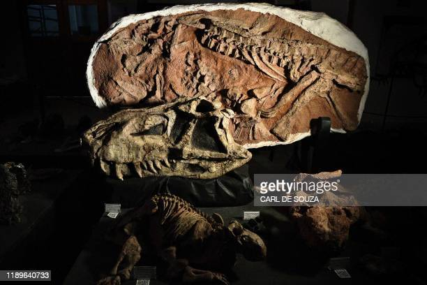 Fossilised head of the Prestosuchus Chiniquensis dinosaur is seen at CAPPA, a Brazilian research support centre for paleontology in Sao Joao do...