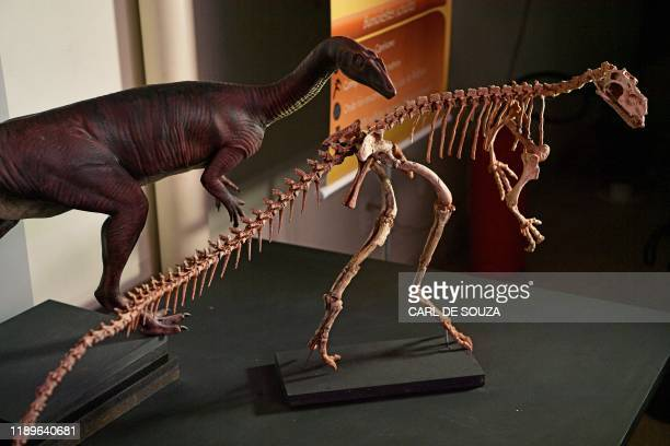 A fossilised skeleton of a 233 million year old Buriolestes Schultzi dinosaur is seen at CAPPA a Brazilian research support centre for paleontology...