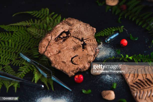fossils and ferns on a dark background. paleontology concept with a dinosaur imprint. earth science header. - arthropod stock pictures, royalty-free photos & images