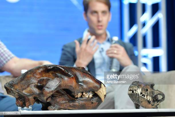 Fossils on display for Polar Extremes during the 2019 Summer TCA press tour at The Beverly Hilton Hotel on July 30 2019 in Beverly Hills California