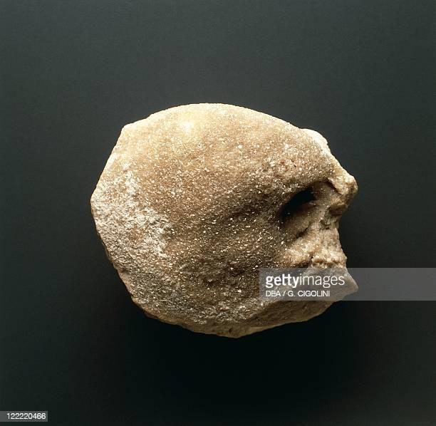 Fossils Protostomia Mollusca Bivalvia Megalodon paronai Triassic Italy