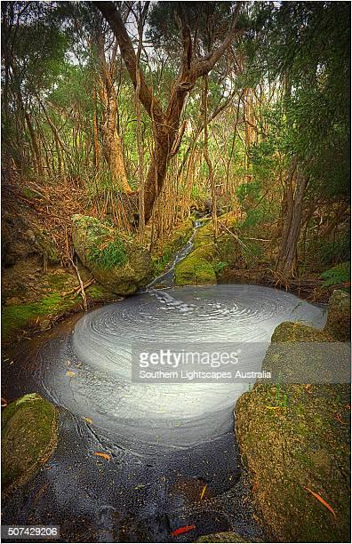 Fotheringate creek and rainforest, Lacotta, Flinders Island, Bass Strait, Tasmania, Australia.