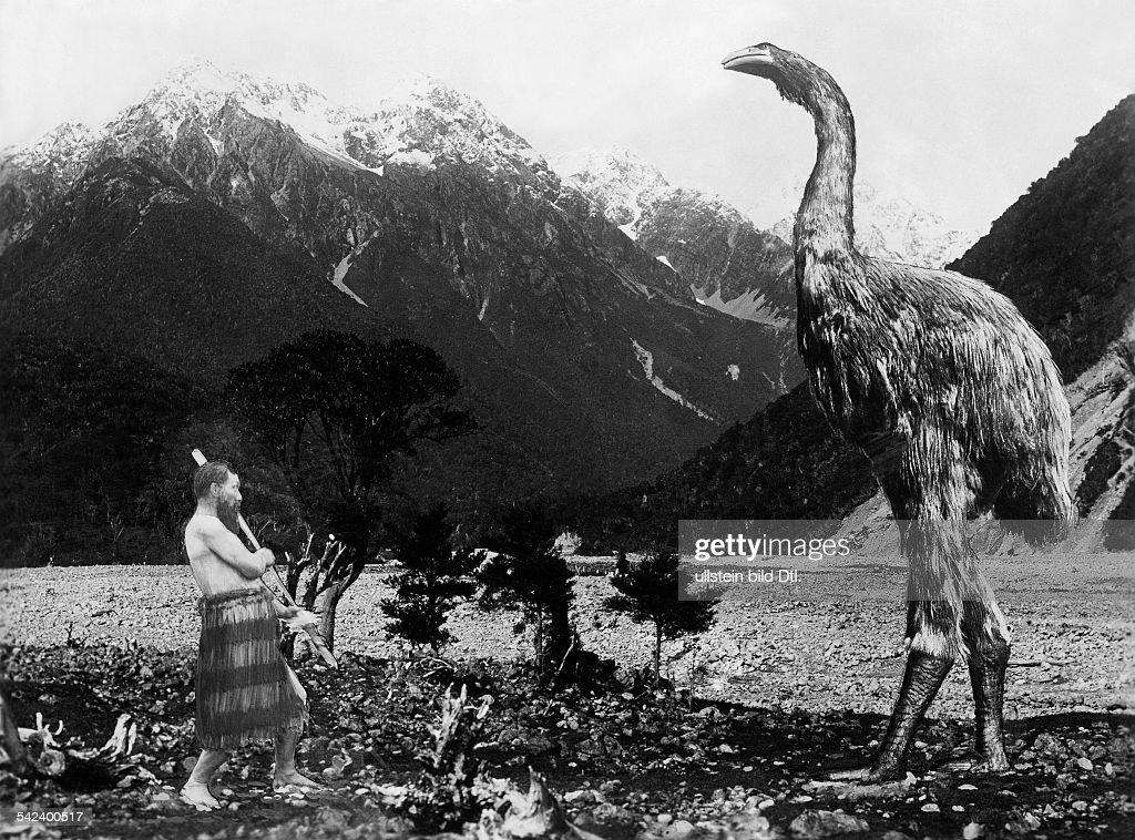 Neuseeland Terror Detail: Moas , Neuseeland Pictures
