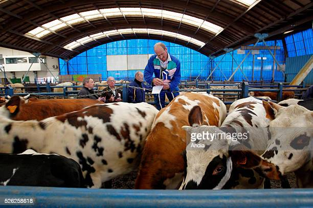 Fougeres L'Aumaillerie cattle market Horse dealers and buyers