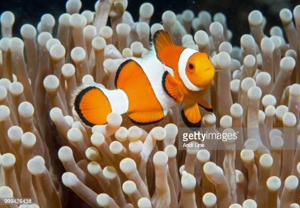 Found Nemo... ;-)