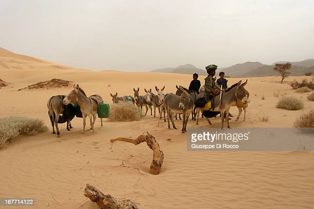 CONTENT] I found strange the appearance of these young shepherds near the Temet dune No village around Foggy atmosphere The area not far from the...