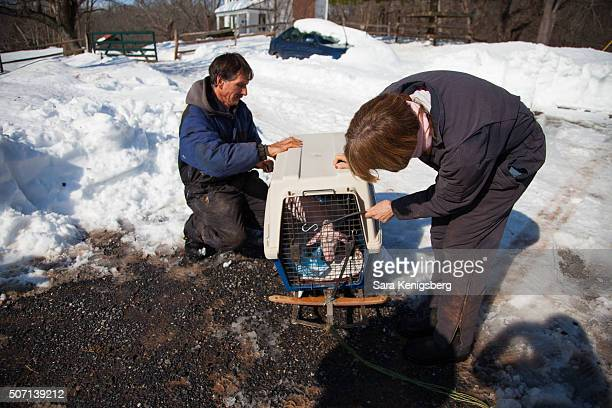 Founders Dave Hoeraus and Terry Cummings welcome Wee Wee the piglet to the Poplar Spring Animal Sanctuary January 27 2016 in Poolesville Maryland The...