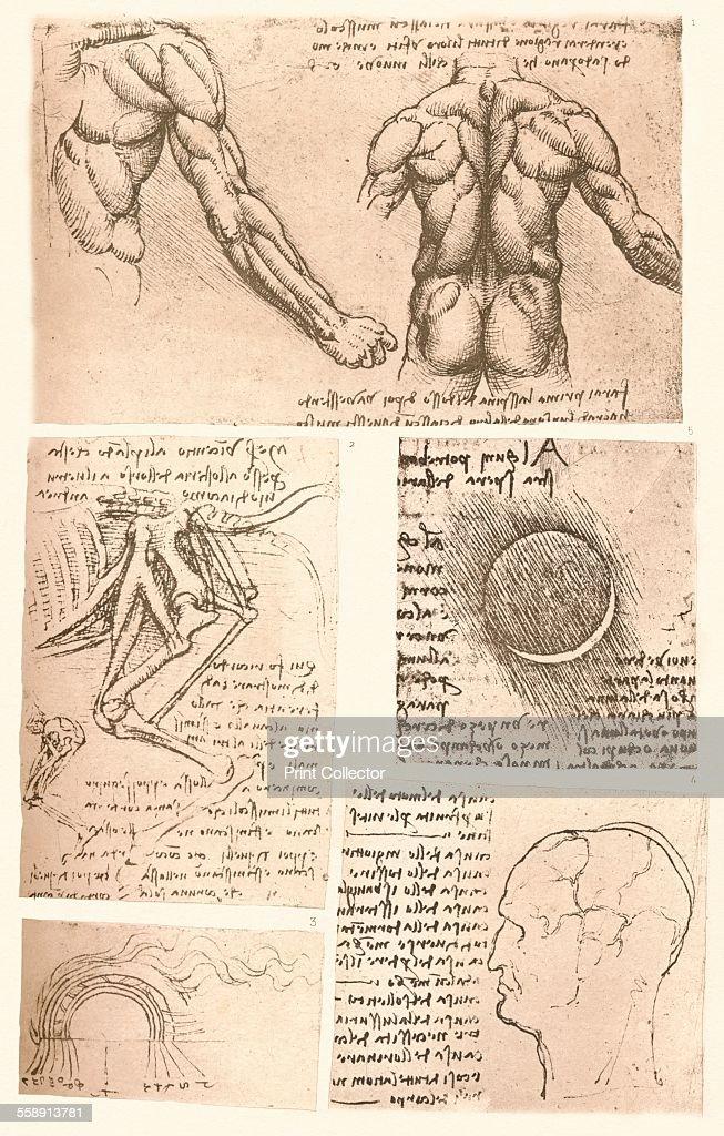 Four anatomical drawings, c1472-c1519 (1883). Artist: Leonardo da ...
