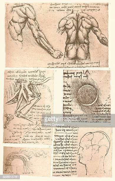 Four anatomical drawings c1472c1519 From The Literary Works of Leonardo Da Vinci Vol II by Jean Paul Richter PH DR [Sampson Low Marston Searle...