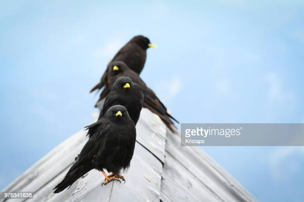 Four birds sitting on roof