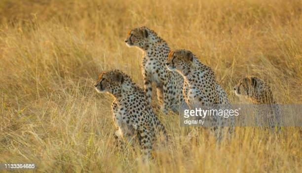 four brothers - kenya stock pictures, royalty-free photos & images