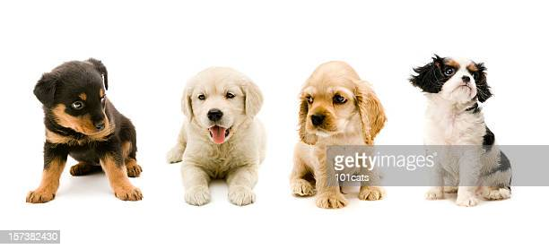 four buddies - puppy stock pictures, royalty-free photos & images