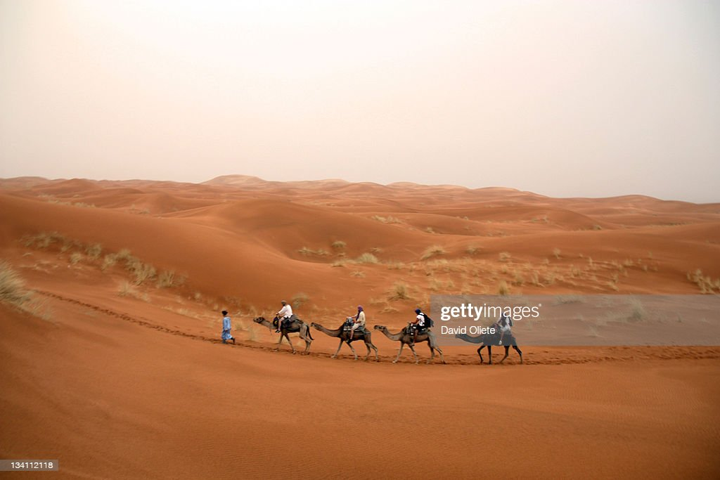 Four camels and touareg walking in desert : Foto de stock
