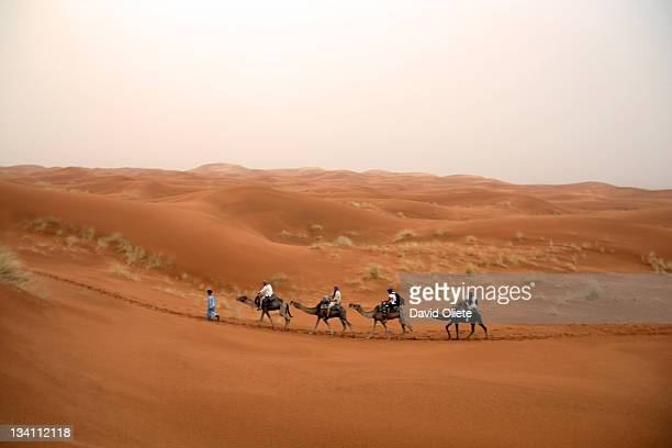 four camels and touareg walking in desert - david oliete stock-fotos und bilder