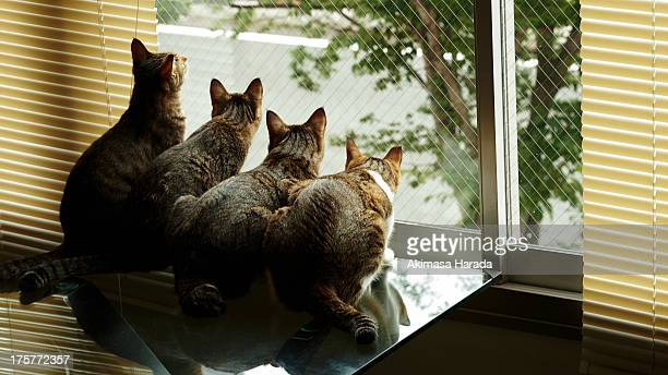 Four cats are arranged in a row.