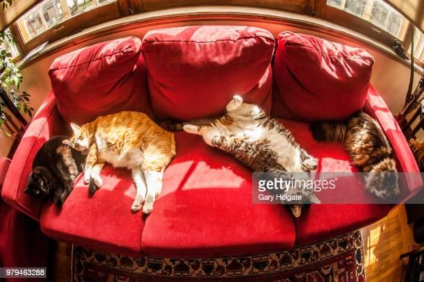 Four cats lying on sofa