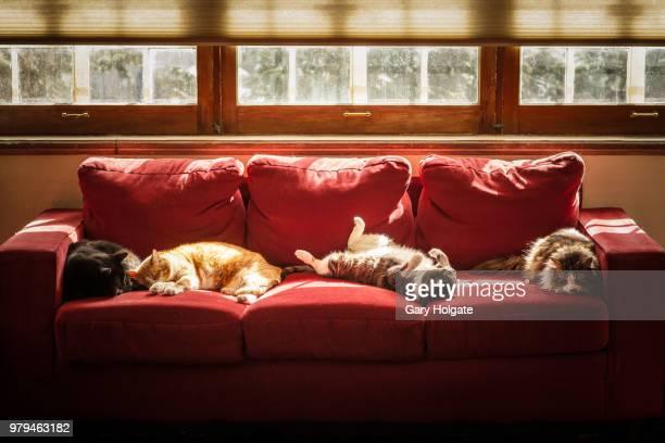 four cats sleeping on sofa - quatre animaux photos et images de collection