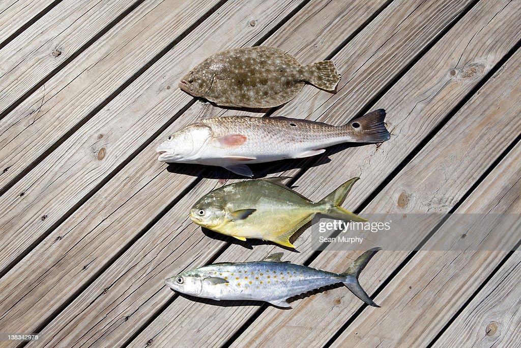 Four Caught Fish : Stock Photo