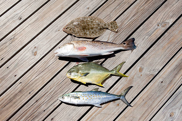 Four Caught Fish Wall Art