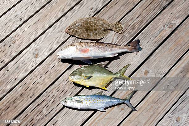 Four Caught Fish